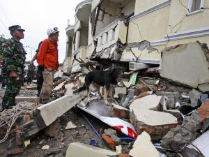 Tim penyelamat dibantu anjing pelacak mencari korban gempa yang masih